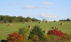 Pastoral Serenity