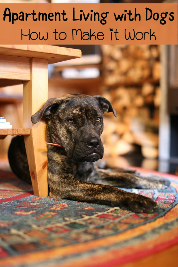 Das Beste Apartment Living With Dogs How To Make It Work Dogvills In Diesem Monat