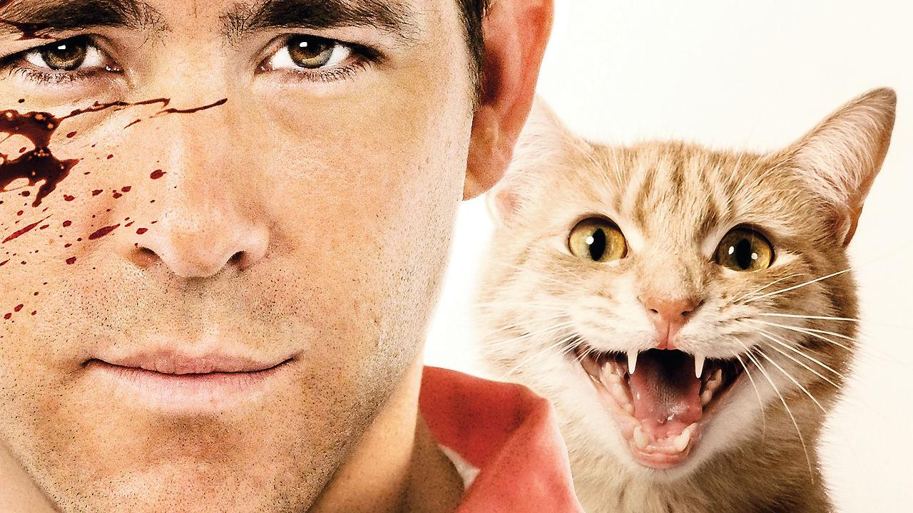 randevú interjú macskák Az első 5 legnépszerűbb ingyenes társkereső oldal