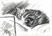 Realistic cat charcoall drawing thumbnail