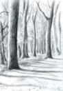 impressionistic treescape graphite pencil drawing thumbnail