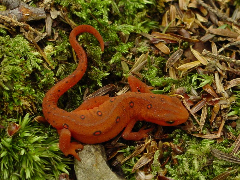 pg-8-newt