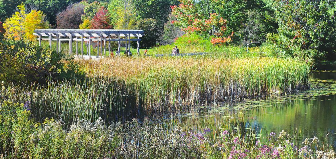 Visitors explore the F.R. Newman Arboretum in the Cornell Plantations.