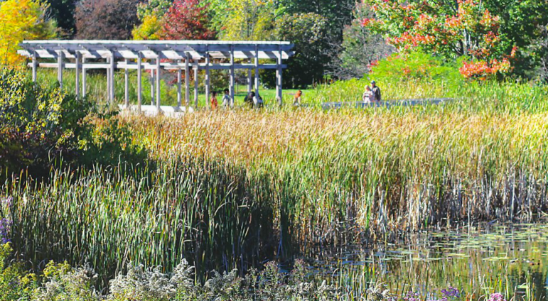 The Board of Trustees has voted to rename the Plantations the Cornell Botanic Gardens.