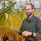 Prof. Edward Buckler at one of the laboratory's greenhouses.