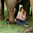 Ashley Bell and Lek Chailert among elephants in Love & Bananas.