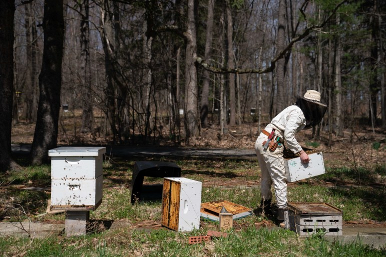 Dyce Bee Lab staff checks on the bees to see how the colonies are growing.