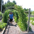 Stephen Henhawk, an instructor for the the course, walks in the Cayuga garden.