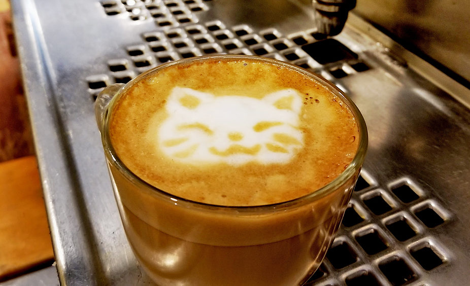"Alley Cat Cafe offers its customers coffee drinks with cat-inspired names — among them, the ""Meowcchiato"" or the ""Catnap Latte."""