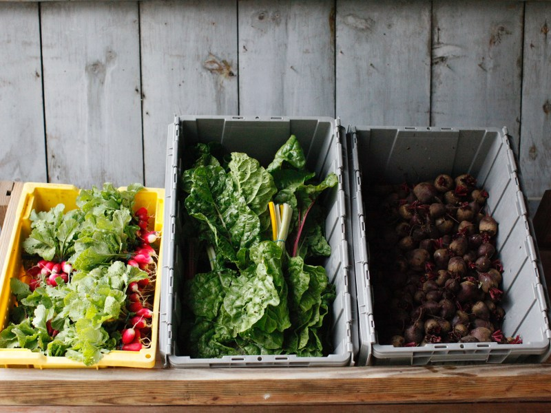 From left to right are fresh organic radishes, five color silverbeet Swiss chard and beets. (Courtesy of Lily Cowen, CALS '21)