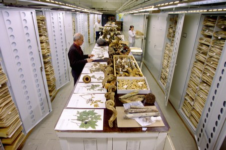 Botanical collections are displayed at the Smithsonian Institution's National Museum of Natural History. Botany staff present are Dr. David Bruce Lellinger (left, front), Carol Kellof (right, middle), and Rusty Russell (left, back).