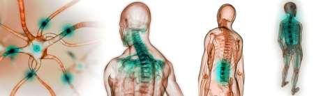 Nicolas Cornevin - Osteopathe Coubert 77170 - Qu'est ce que l'Ostéopathie