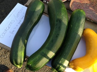 Allotment produce - free to a good home! Photo by Mary Hutchison