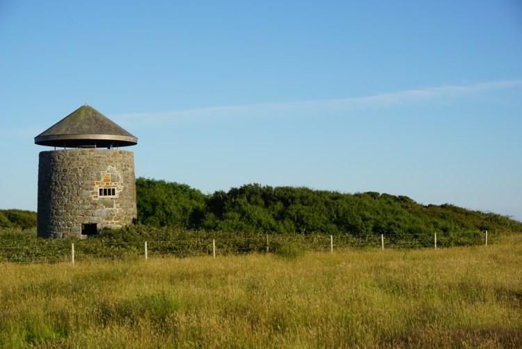 Lizard Windmill