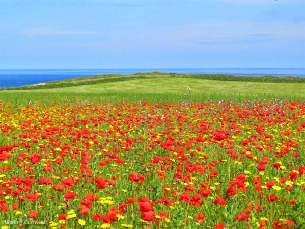 iWalk Cornwall