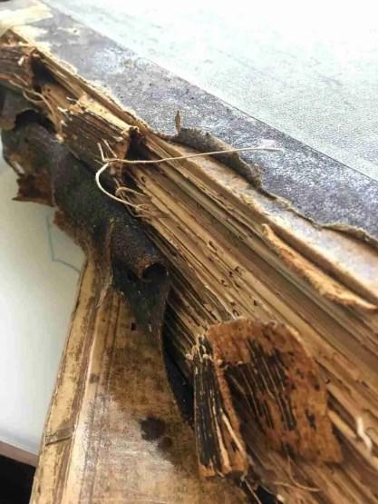 Old ledger bound in fish skin