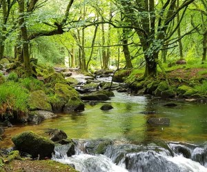 golitha falls bodmin cornwall days out ideas things to do ideas weekend ideas family day out walking cornwall south west coast path