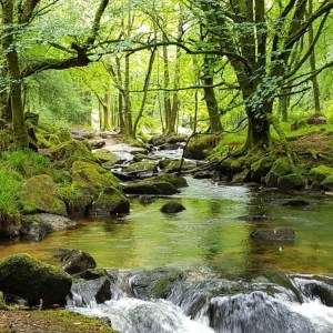 Days out in Cornwall: Golitha Falls