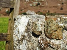 natural stone and lichens