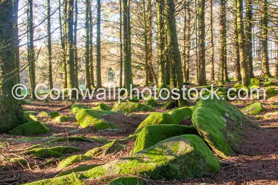 Mossy Boulders Amidst Trees
