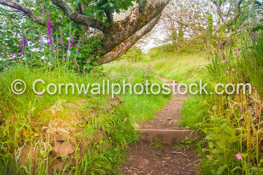Path Past Tree And Foxgloves