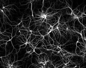 photo of neurons and neural networks firing from creatine