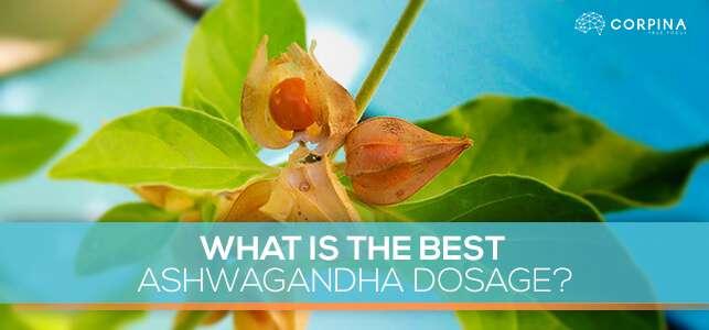 what is the best ashwagandha powder dose