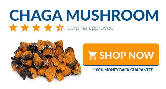 where to buy chaga mushroom online