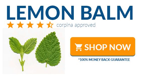 where to buy lemon balm online