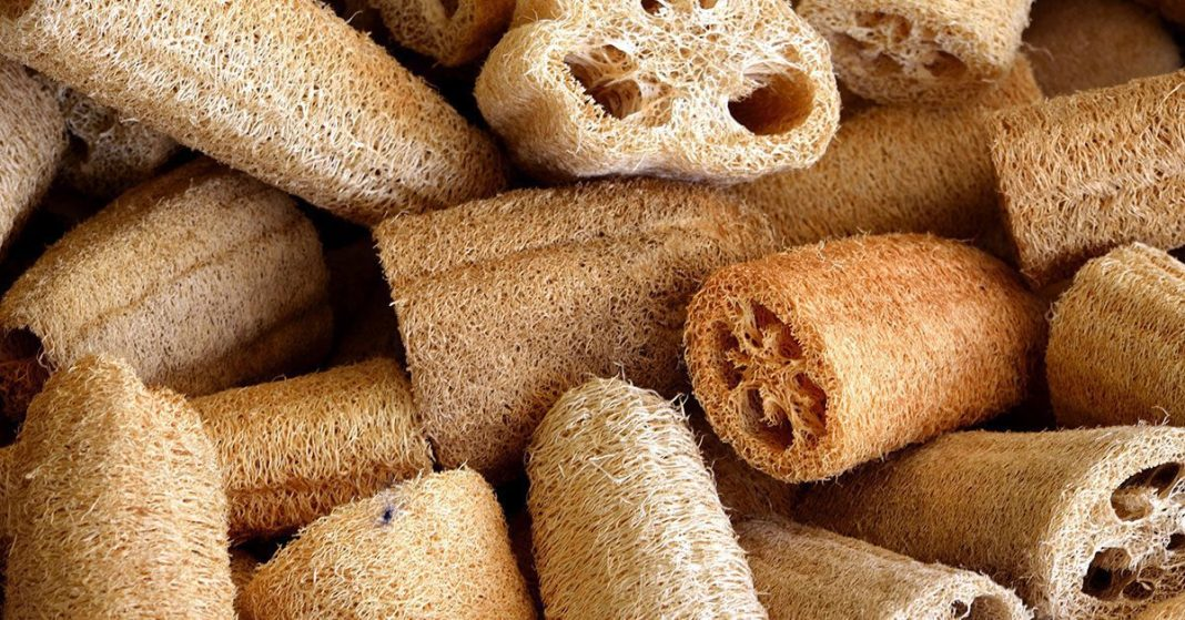 Loofah Sponge: What to Know About Using It to Clean and Exfoliate
