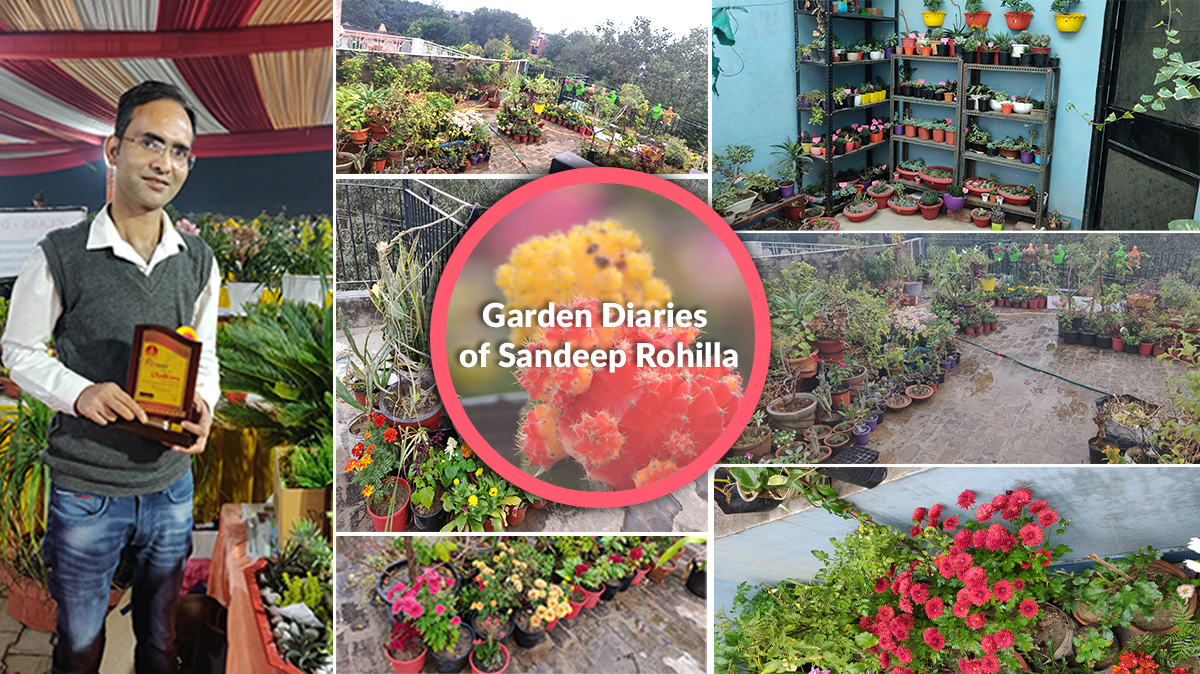Fresh blooms from the garden diaries of Sandeep Rohilla