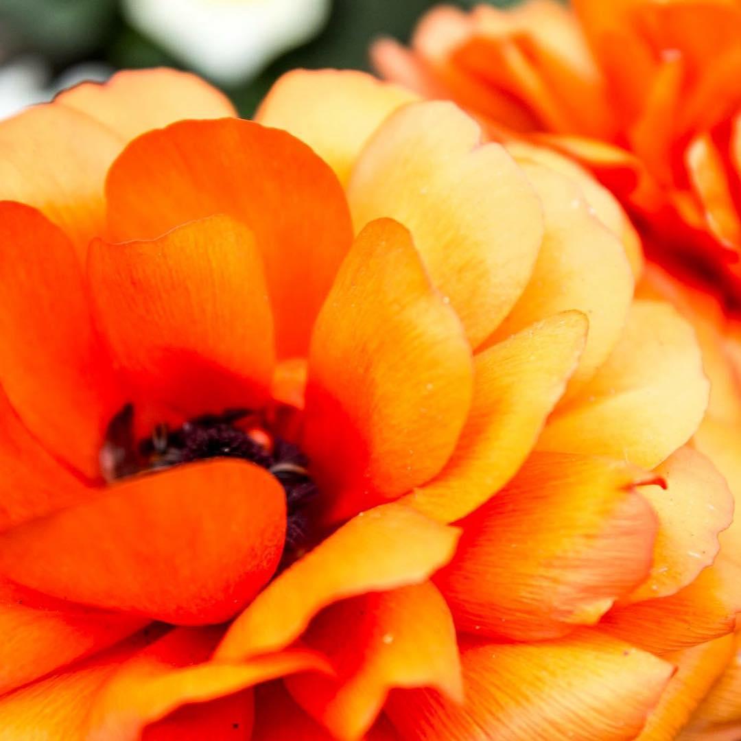 Beautiful flowers throughout rufford