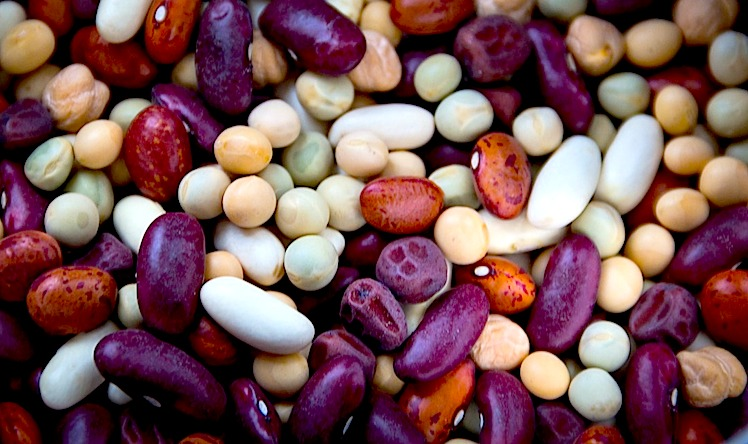 fèves et haricots source de protéines végétales