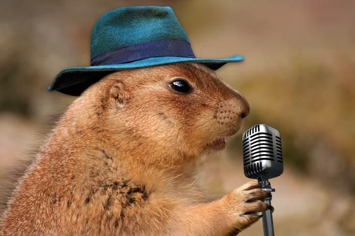 Hamster avec un chapeau et un micro