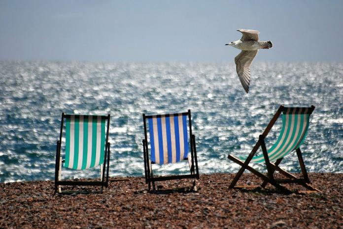 Chaises et mouette au bord de l'eau