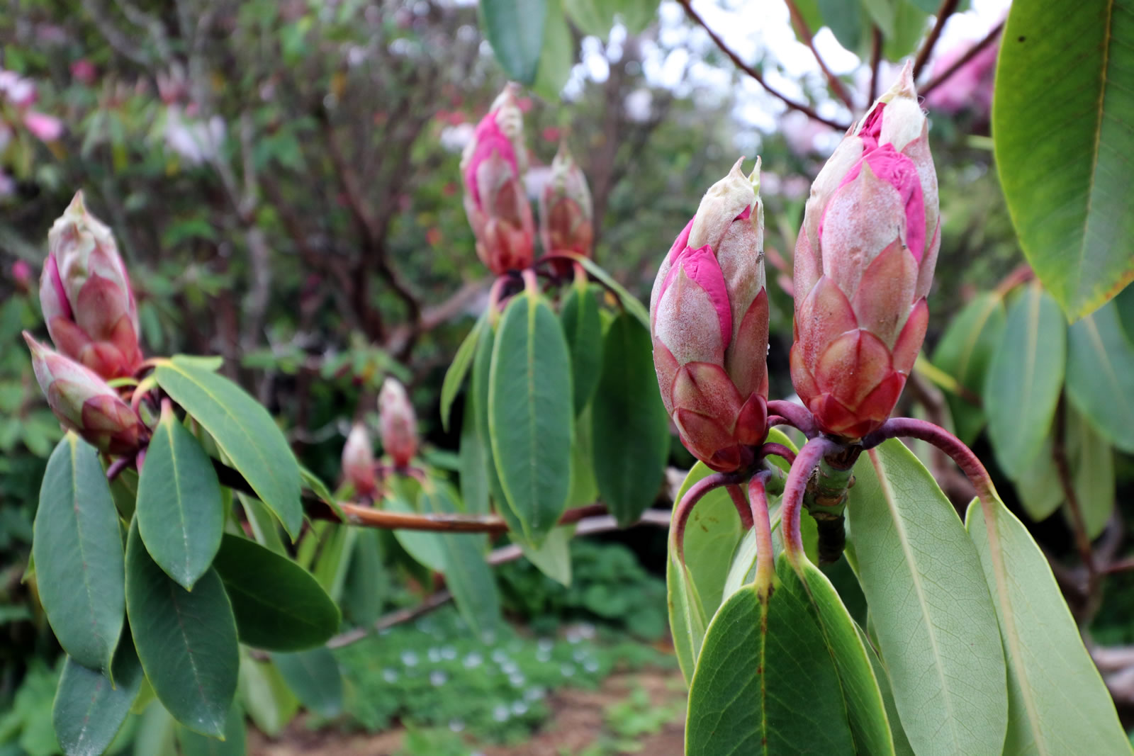 2017_10_15 Botanical Gardens 03