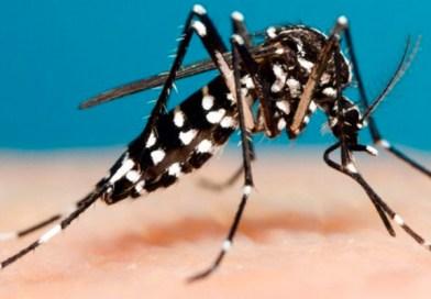 PREOCUPANTE: Guarda-Mor e Vazante estão entre as três cidades da região com maior incidência de dengue; confira os dados completos