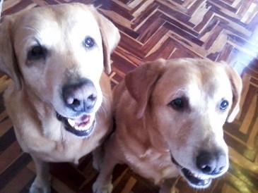 Lucas&Bruno