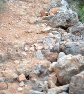 trail recorrido-8