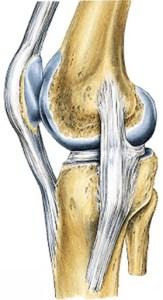 Articulação do joelho