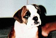 Axel da cucciolo