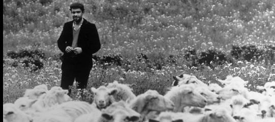 Tutta la rabbia dei pastori sardi per il latte versato e malpagato