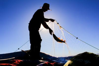 Attrezzi da pesca non biodegradabili, serve alternativa eco-friendly