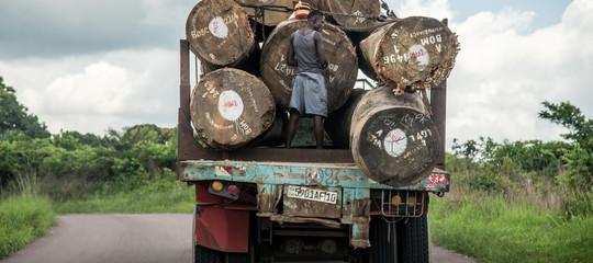 mercato legno illegale congo