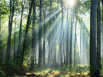 al via campagna 'amo la carta', leggere non consuma alberi