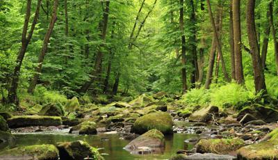 Ecco quanto ci costa la perdita di biodiversità