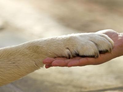 Lav-Fondazione Capellino in aiuto di cani e gatti delle famiglie in difficoltà