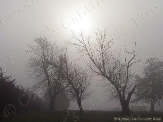 A rare morning of fog and bare trees in southeastern Nebraska