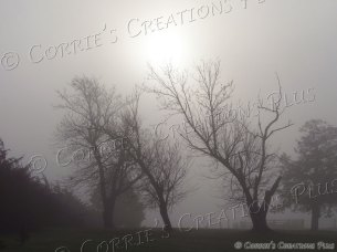 Misty Morning. A foggy spring morning in southeastern Nebraska