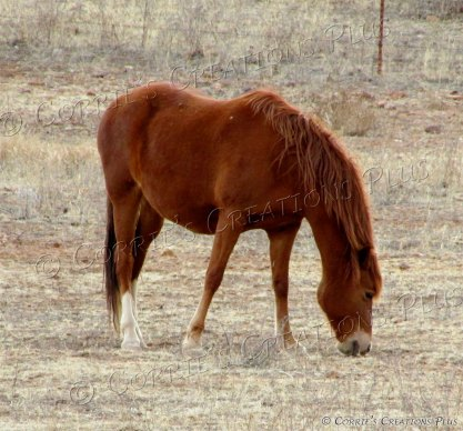 Horse grazing peacefully near Sonoita, Arizona